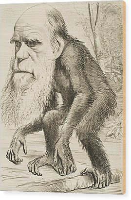 Caricature Of Charles Darwin Wood Print by English School