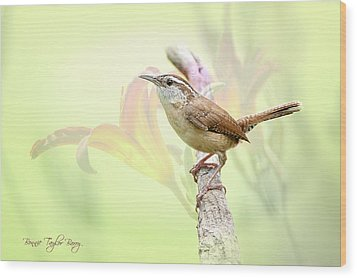 Carolina Wren In Early Spring Wood Print by Bonnie Barry
