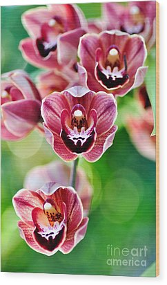 Cascading Miniature Orchids Wood Print by Kaye Menner