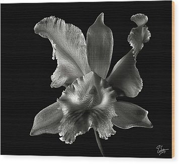Catalea Orchid In Black And White Wood Print by Endre Balogh