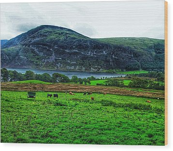 Cattle Grazing At Buttermere Wood Print by Joan-Violet Stretch