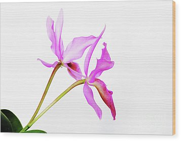 Cattleya Guatemalensis Wood Print by Charline Xia
