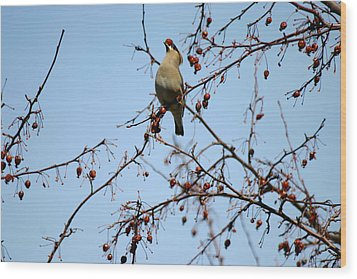 Cedar Wax Wing Wood Print by Gerald Salamone