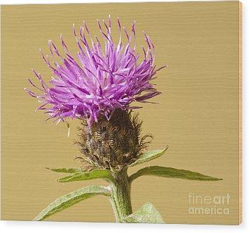 Charming Cornflower Wood Print by Donald Davis