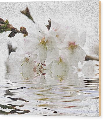 Cherry Blossom In Water Wood Print by Elena Elisseeva