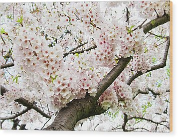 Cherry Blossom Wood Print by Sky Noir Photography by Bill Dickinson