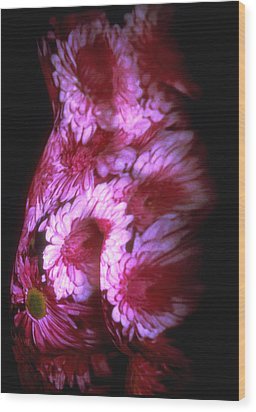 Chrysanthemum Wood Print by Arla Patch
