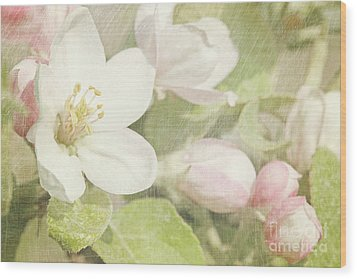 Closeup Of Apple Blossoms In Early Wood Print by Sandra Cunningham