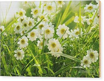 Closeup Of Daisies In Field Wood Print by Sandra Cunningham
