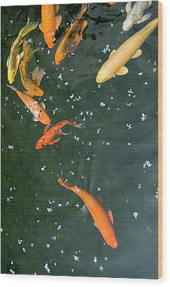 Colorful Fishes And Floating Petals Wood Print by Lawren