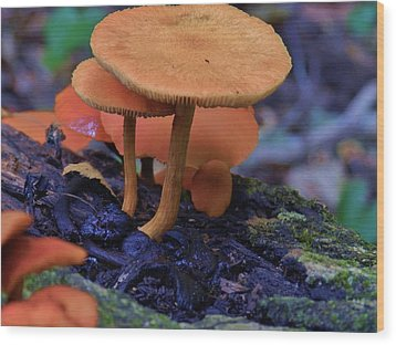 Colorful Mushrooms Wood Print by Robert Ulmer