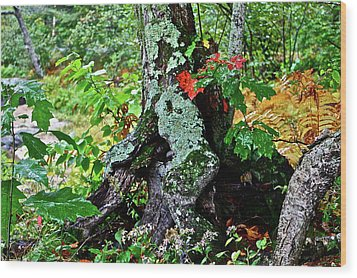 Colorful Stump Wood Print by Diana Hatcher