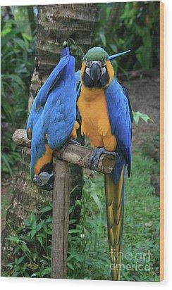 Colourful Macaw Pohakumoa Maui Hawaii Wood Print by Sharon Mau