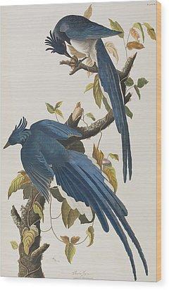 Columbia Jay Wood Print by John James Audubon