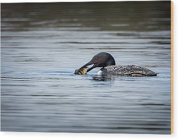 Common Loon Wood Print by Bill Wakeley