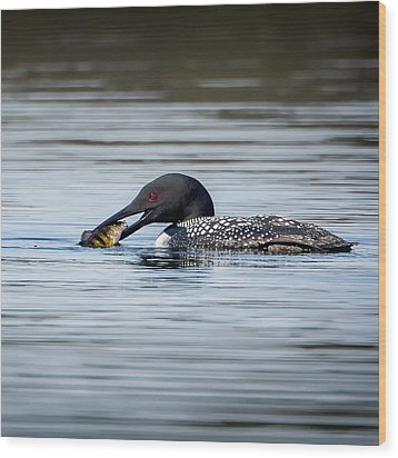 Common Loon Square Wood Print by Bill Wakeley