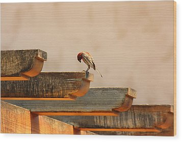 Contemplation Wood Print by Rebecca Cozart