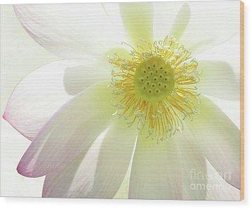 Cool Lotus Wood Print by Sabrina L Ryan