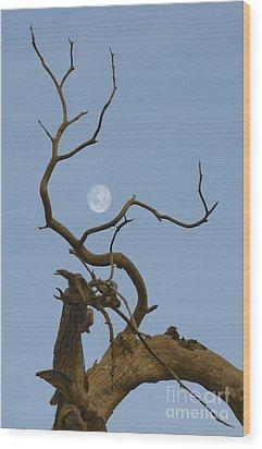 Cotton Moon Wood Print by Sophie De Roumanie