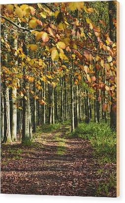 Country Road Wood Print by Svetlana Sewell