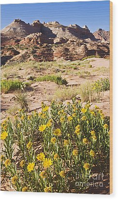 Coyote Buttes Mule's Ear Wood Print by Greg Clure