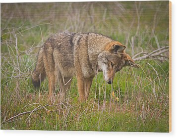 Coyote Wood Print by Carl Jackson