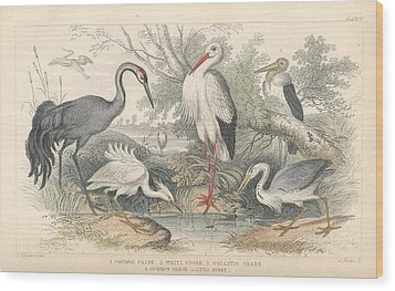Cranes Wood Print by Oliver Goldsmith