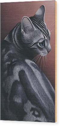 Cropped Cat 1 Wood Print by Carol Wilson