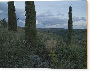 Cypress Trees Growing In The Rolling Wood Print by Todd Gipstein