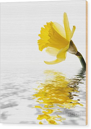 Daffodil Reflected Wood Print by Jane Rix