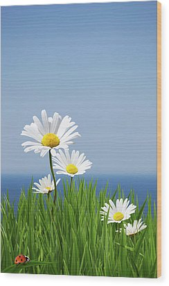 Daisies On A Cliff Edge Wood Print by Andrew Dernie