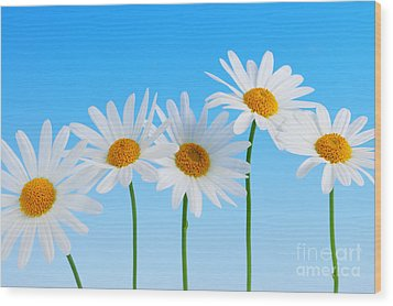 Daisy Flowers On Blue Wood Print by Elena Elisseeva
