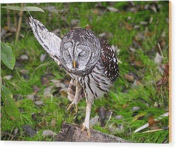 Dancing Owl Wood Print by David Lee Thompson