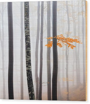 Delicate Forest Wood Print by Evgeni Dinev