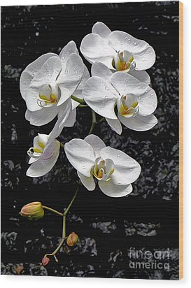 Dew-kissed Cascading Orchids Wood Print by Sue Melvin