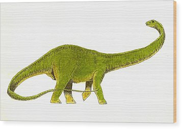 Diplodocus Wood Print by Michael Vigliotti