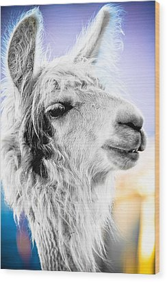 Dirtbag Llama Wood Print by TC Morgan