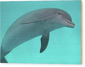 Dolphin Wood Print by Sandy Keeton