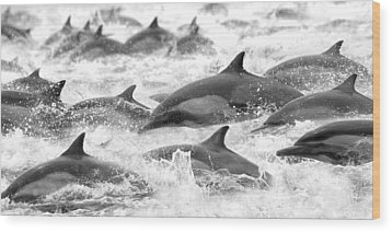 Dolphins On The Run Wood Print by Steve Munch