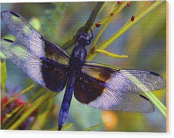Dragonfly Wood Print by Tony Ramos