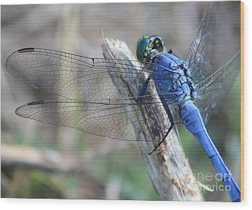 Dragonfly Wing Detail Wood Print by Carol Groenen