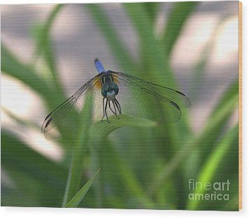 Dragonfly Wit An Attitude Wood Print by Debbie May