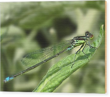Dragonfly1 Wood Print by Svetlana Sewell