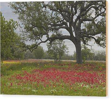 Drummonds Phlox Meadow Near Leming Texas Wood Print by Tim Fitzharris