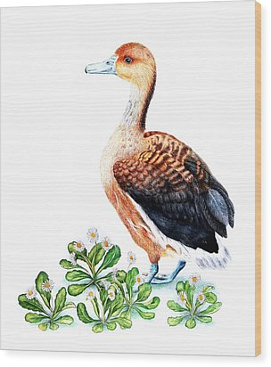 Duck And Daisies Wood Print by Sandra Moore