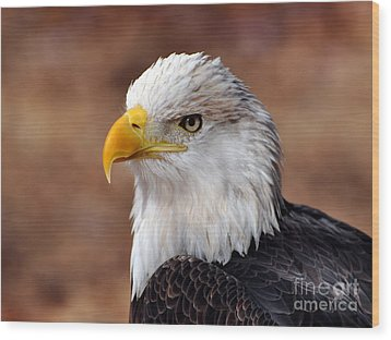 Eagle 25 Wood Print by Marty Koch
