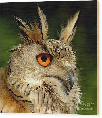 Eagle Owl Wood Print by Jacky Gerritsen