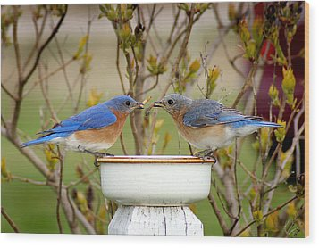 Early Bird Breakfast For Two Wood Print by Bill Pevlor