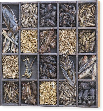 Edible Insects Wood Print by Tim Gainey