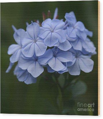 Eia Au La E Ke Aloha Blue Plumbago Wood Print by Sharon Mau